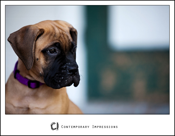 Sheboygan pet photography