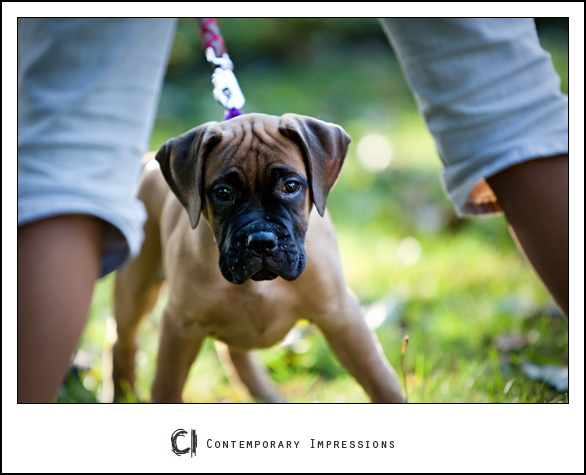 Sheboygan pet photography_3749